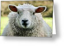 Ewe's Just Fluffy Greeting Card