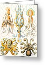 Examples Of Various Cephalopods Greeting Card