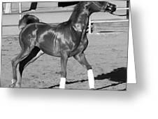 Exercising Horse Bw Greeting Card