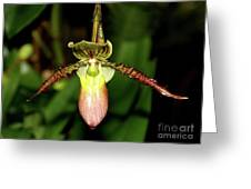 Exotic Beauty Greeting Card