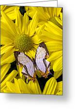 Exotic Butterfly Greeting Card