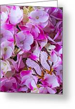 Exotic Butterfly On Hydrangea Greeting Card
