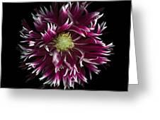 Exotic Dahlia Greeting Card