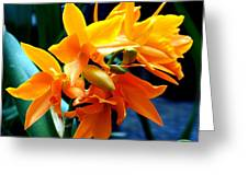 Exotic Orange Greeting Card