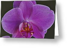 Exotic Orchid 2 Greeting Card