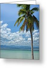 Exotic Palm Tree Greeting Card