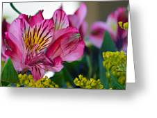 Exotic Pink Greeting Card