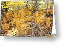 Exotic Plants Of The Dunes Greeting Card