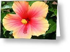 Exotic Pride Greeting Card