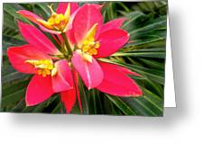 Exotic Red Flower Greeting Card
