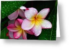 Exotic Tears  Greeting Card