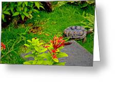 Exploration By A Red Footed Tortoise  Greeting Card