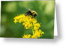 Exploring Goldenrod 2 Greeting Card