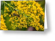 Exploring Goldenrod 4 Greeting Card