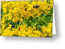 Exploring Goldenrod 5 Greeting Card