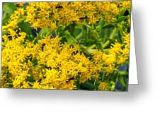 Exploring Goldenrod 6 Greeting Card