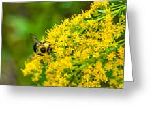 Exploring Goldenrod Greeting Card