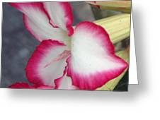 Exposed Greeting Card