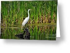 Exquisite Egret Greeting Card