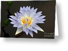 Exquisite Lavender Waterlily Greeting Card