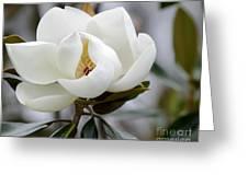 Exquisite Magnolia Greeting Card