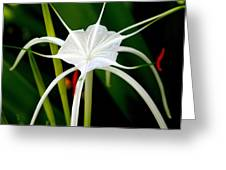 Exquisite Spider Lily Greeting Card