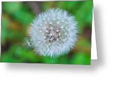 Extra Little Dandelion Wish Greeting Card