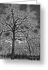 Extreme Contrast Bare Trees During Winter Photograph Greeting Card
