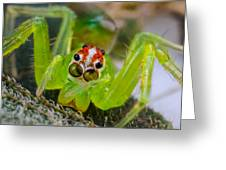Extreme Macro Of A Spiders Face Greeting Card