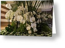 Exuberant Orchid Display Greeting Card