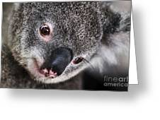 Eye Am Watching You - Koala Greeting Card