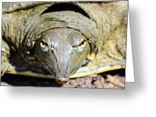 Eye Liner Turtle 8494 Greeting Card