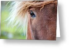 Eye Of A Pony Greeting Card