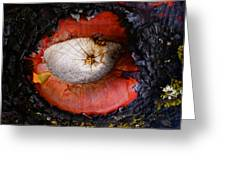 Eye Of Madrone Greeting Card