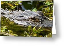 Eye Of The Alligator Greeting Card