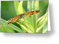 Eye Of The Butterfly Greeting Card
