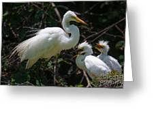Eye Of The Egret Greeting Card