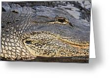 Eye Of The Gator Greeting Card by Adam Jewell
