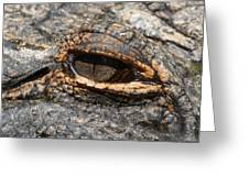 Eye Of The Gator Greeting Card