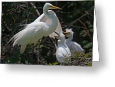 Eye Of The Heron Greeting Card