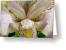 Eye Of The Iris Greeting Card