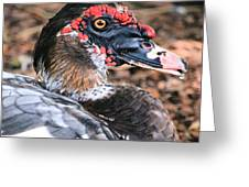 Eye Of The Muscovy Duck Greeting Card