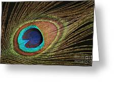 Eye Of The Peacock #5 Greeting Card
