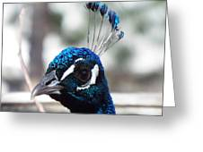 Eye Of The Peacock Greeting Card