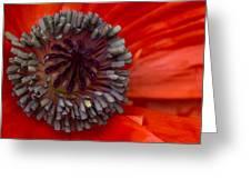 Eye Of The Poppy Greeting Card