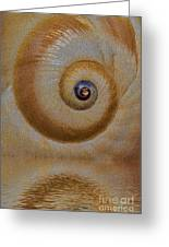 Eye Of The Snail Greeting Card by Susan Candelario