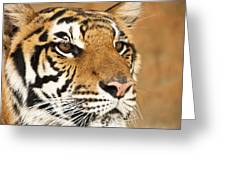Eye Of The Tiger. Greeting Card