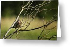 Eye On The Sparrow Greeting Card
