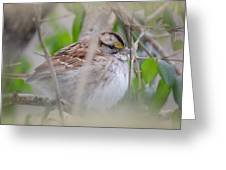 Eye On The Sparrow Greeting Card