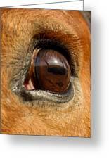 Eye Greeting Card by Paulina Szajek